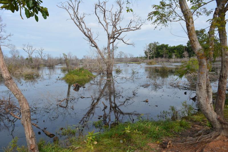 Cambogia(215)