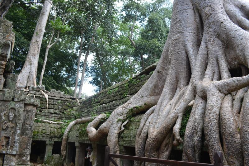 Cambogia(421)